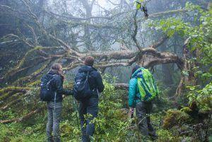 Trekking Yungas Corto