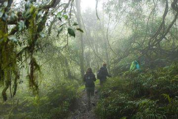 trekking yungas medio dia
