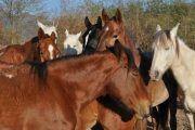 caballos sayta 180x120 - Horseback Riding Half day with BBQ and Transfer